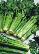 Utah 52-70  R Improved (Celery/O/P)