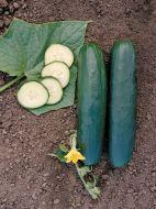 Rockingham (Cucumber/slicing)