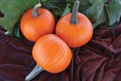 Jack Sprat (Hybrid Pumpkin)