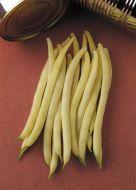 Sunburst (Wax Bush Bean)