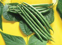 Pike Bean (Green Beans Bush)