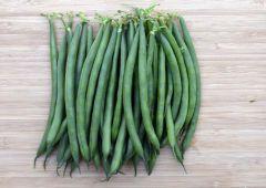 Pharaoh (Green Beans Bush)