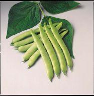 Furano (Green Bush Romano)