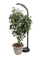 Standing Plant Light - H1806