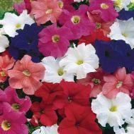 Dreams Mix (Petunia pellets/grandiflora)