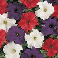 Dreams Patriot Mix (Petunia/grandiflora/pellets)