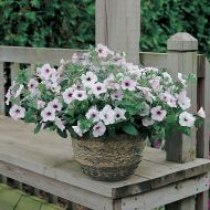 Tidal Wave® Silver (Petunia/multiflora/pelleted)