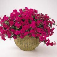 Tidal Wave® Purple (Petunia/multiflora/pelleted)