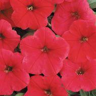 Easy Wave® Red (Petunia/multiflora/pelleted)
