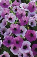 Easy Wave® Plum Pudding Mix (Petunia/multiflora/pelleted)