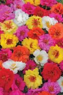 Happy Trails™ Mix (Portulaca/mult-pellet)