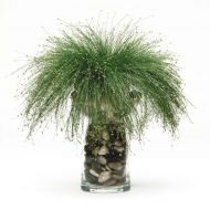 Live Wire® (Isolepis Sedge/pelleted)