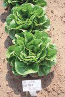 Green Towers M.I. (Lettuce/Romaine/pelleted)