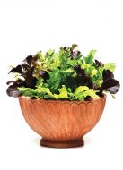 Simply Salad™ Alfresco Mixture (Lettuce mix/pelleted)