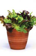 Simply Salad™ City Garden Mix (Lettuce mix/pelleted)