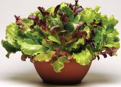 Simply Salad™ Summer Picnic Mix (Lettuce mix/pelleted)