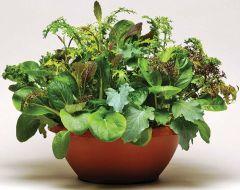 Simply Salad™ Wonder Wok (Lettuce mix/pelleted)