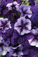 Fuseables® - Pleasantly Blue (Petunia/multi-pellet)