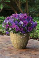 Fuseables® - Healing Waters (Petunia/Bacopa/multi-pellet)