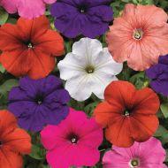 Hurrah™ Mix (Petunia/multiflora/pelleted)