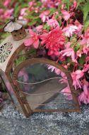 Funky Pink (Hybrid Begonia Pellets)