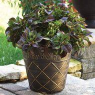 Sol™ Gekko Green (Foliage Celosia)