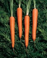 Cellobunch (Carrot/pellets)