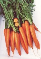 Magnum (Carrot/nantes/hybrid/pelleted)