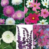 Butterfly Garden Special Collection