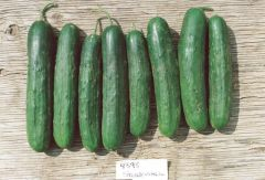 Stonewall (Cucumber/slicing/untreated)
