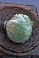 Golden Acre (Cabbage/early/O/P/untreated)
