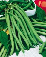 Blue Lake (Pole Bean/untreated)