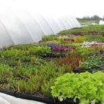 Bringing Your Seedlings Outdoors
