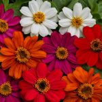 May/June Sowing Annuals